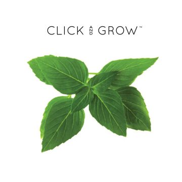kapsulki-click-and-grow-nasiona-bazylia-tajska