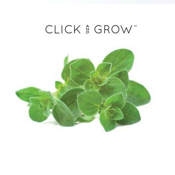kapsulki-click-and-grow-nasiona-oregano