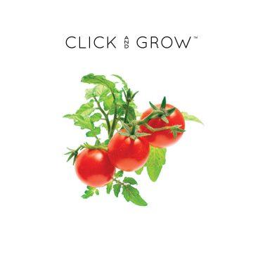 kapsulki-click-and-grow-nasiona-pomidorki-koktajlowe-mini-tomato