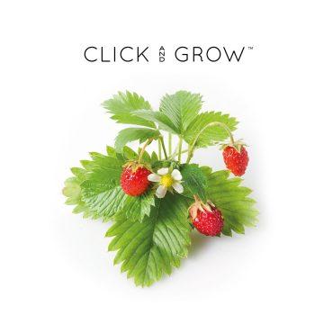 kapsulki-click-and-grow-nasiona-poziomka