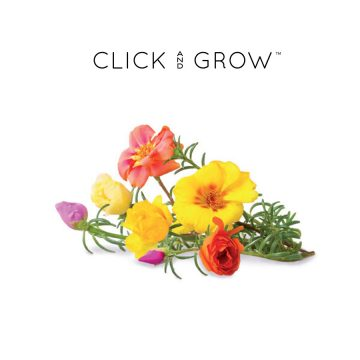 kapsulki-click-and-grow-nasiona-roza-stulistna