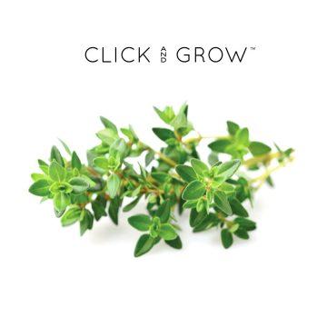 kapsulki-click-and-grow-nasiona-tymianek